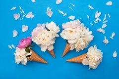 Waffle ice cream cones with white peony flowers on blue background. Summer concept. Copy space, top view. Waffle ice cream cones with white peony flowers and royalty free stock photo