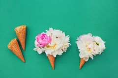 Waffle ice cream cones with white peony flowers on green background. Summer concept. Copy space, top view. Minimalism royalty free stock photos