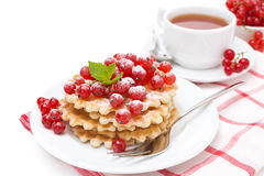 Waffles с красной смородиной, взбрызнутым напудренным сахаром для завтрака Стоковое Изображение