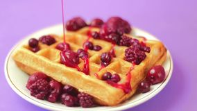 Waffles with red berries stock footage