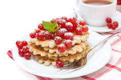 Waffles with red currant, sprinkled powdered sugar for breakfast Stock Photos