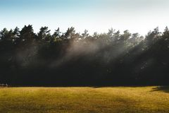 Wafts vom Nebel über einer Wiese in mornig Sonnenlicht mit Bäumen eines f lizenzfreie stockfotografie