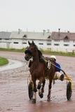 Wagen des laufenden Pferds Lizenzfreie Stockfotos