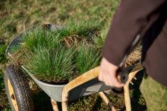 Wagen gefüllt mit Rasen und neuen Wiesengrüns in den Händen von Männern Konzept der Landschaftsgestaltungs- und Landschaftsar lizenzfreie stockfotos
