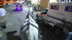 Wagen mit Pferdvideo HD stock video footage