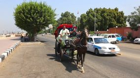 Wagen mit Pferdvideo HD stock footage