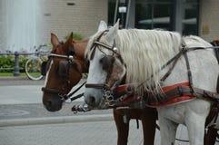 Wagenpferde in Berlin, Deutschland für das Transportieren von Touristen in der Stadt Stockfotografie