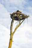 Wagenrad auf Baum für Storchnest Lizenzfreies Stockfoto