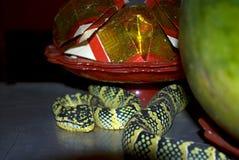Waglers pitviper i ormtemplet, Penang, Malaysia royaltyfri foto