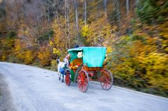Wagon. In Abant park in Turkey at autumn Stock Images