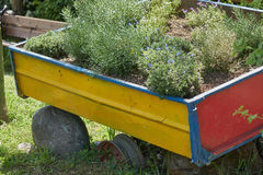 Wagon as a planter on the farm. Old wagon as a planter on the farm Stock Photo