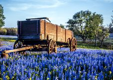 Texas hill country. Wagon in field of bluebonnets in texas hill country stock images