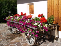 wagon of flowers Stock Images