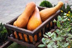 Wagon full of pumpkins Royalty Free Stock Photo