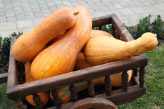 Wagon full of pumpkins Royalty Free Stock Images