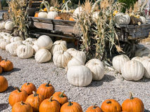 Wagon full of pumpkins and squash Royalty Free Stock Images