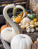 Wagon full of pumpkins, squash and gourds Royalty Free Stock Photos