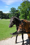 Wagon horses Royalty Free Stock Image