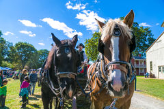 Wagon Horses at Landis Valley. Lancaster, PA, USA - October 9, 2016:  Horses pull a wagon loaded with visitors give a tour of the Landis Valley Farm and Museum Royalty Free Stock Photos