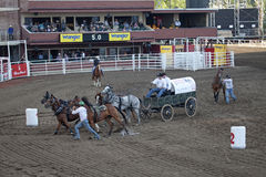 Wagon and horses, race track, Calgary Royalty Free Stock Photos