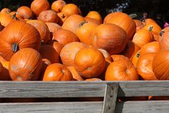 Wagon load of Pumpkins. Wagon load of pumpkin in Iowa Royalty Free Stock Image