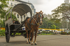 The Wagon by the Park royalty free stock photo