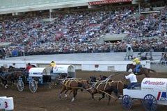 Wagon racing, Calgary Royalty Free Stock Images