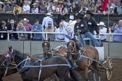 Wagon racing, Calgary Stock Photo