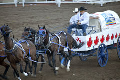 Wagon racing, Calgary Stampede Stock Photo