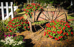 Wagon with red impatiens Stock Image