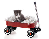 Wagon-Riding Kitty Stock Photography