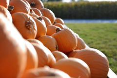Wagon of Small Pumpkins Royalty Free Stock Photography
