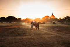Wagon Royalty Free Stock Images
