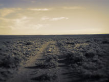 Wagon Trail Leading to Horizon Stock Images