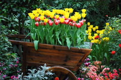 Wagon of tulips Stock Images