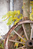 Wagon Wheel. An old wagon wheel leand to a wall Stock Images