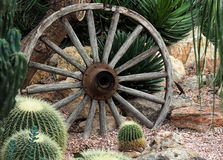 Wagon Wheel And Cacti Stock Photo