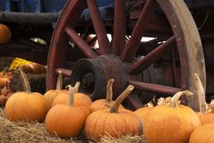 Wagon Wheel and Pumpkins stock images