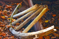 Wagon Wheel. A wooden wagon wheel is left behind with abandoned cars in the forest Royalty Free Stock Image