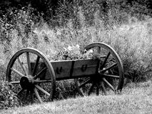 Wagon Wheels. Old Wagon Wheels out in the garden with Flowers in them...Black and White Royalty Free Stock Images
