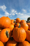 Wagonload of Giant Pumpkins - Michigan USA royalty free stock images