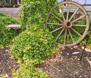Wagonwheel. Wagon wheel perched against overgrown fence royalty free stock photography