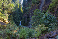 Wahclella fällt in die Columbia River Schlucht Stockbild
