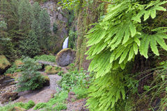 Wahclella Falls with Maidenhair Ferns Royalty Free Stock Photo
