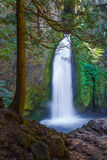 Wahclella Falls. Tumbles Down A Moss And Lichen Covered Cliff, Coumbia River Gorge, Oregon Royalty Free Stock Image