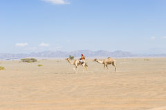 Wahiba Desert Oman Stock Photo