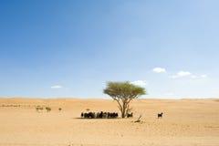 Wahiba Desert Oman Stock Images