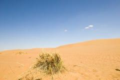 Wahiba Desert Oman Stock Image