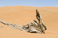 Wahiba Desert Oman Royalty Free Stock Photo