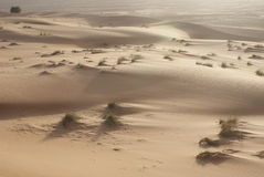 Wahiba Sands, Oman. The sand dunes at Wahiba Sands in Oman Stock Image